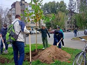 На суботнику в Чернігові висадили декоративні дерева і кущові рослини