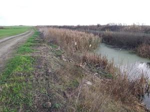 На Чернігівщині гине річка Остер
